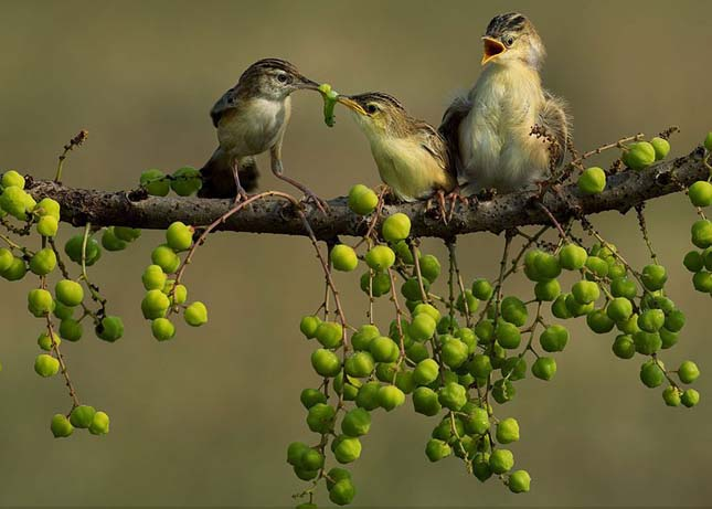 >National Geographic fotópályázat 2014