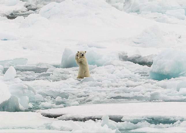 National Geographic fotópályázat 2014