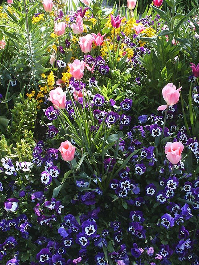 Varázslatos kertek