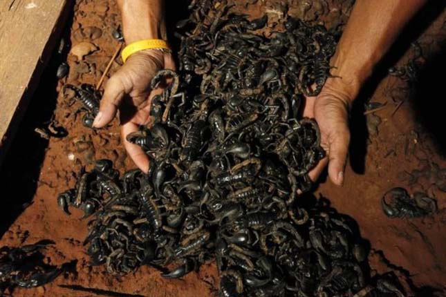 4600 skorpióval él együtt egy thaiföldi férfi