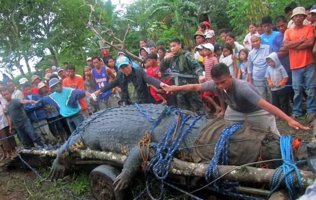 Lolong, a világ legnagyobb krokodilja