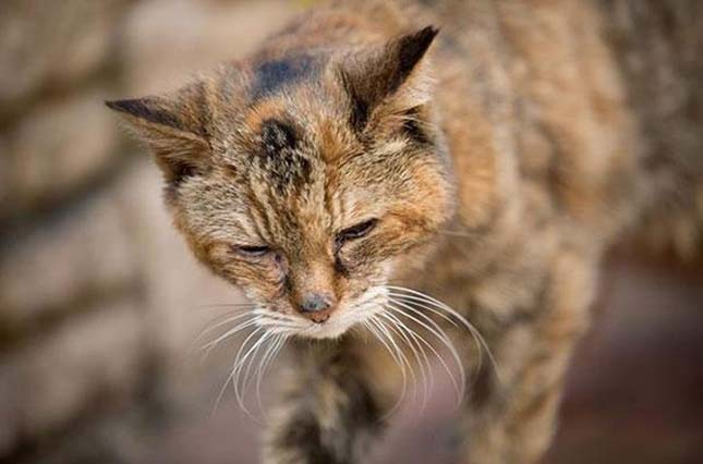 A világ legörgebb macskája