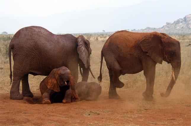 Kelet Tsavo Nemzeti Park, Kenya