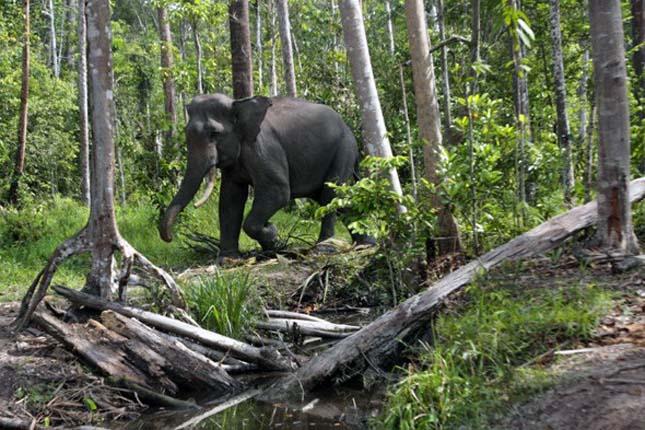 A Szumátra szigeti trópusi esőerdő, Indonézia