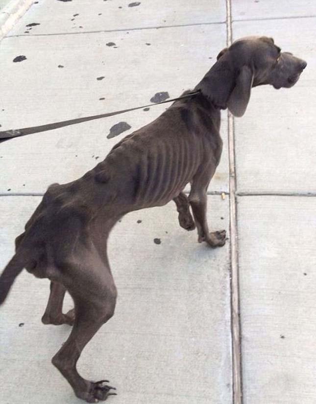 csontsovány kutya
