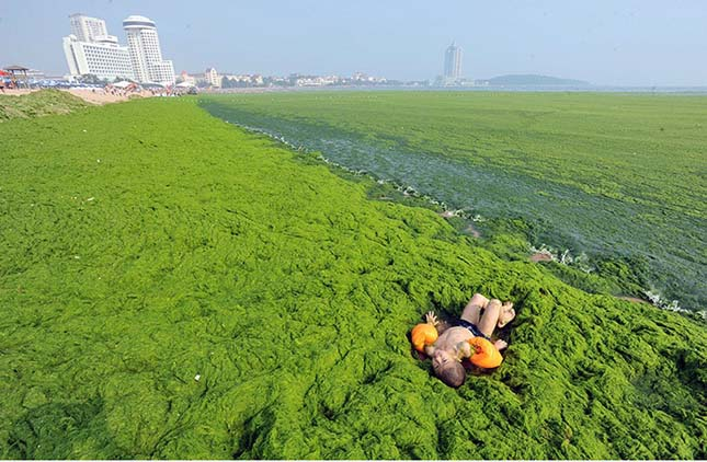 Alga invázió Kínában