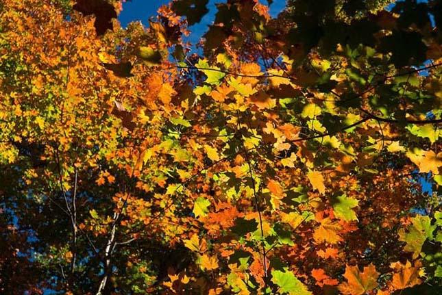 A kanadai Algonquin Provincial Park