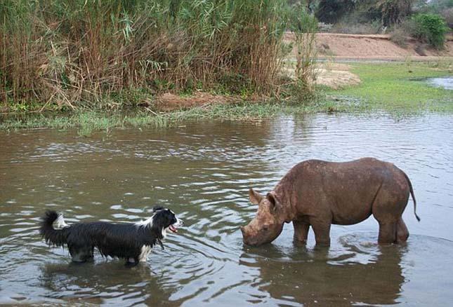 Vadállatok és emberk barátsága