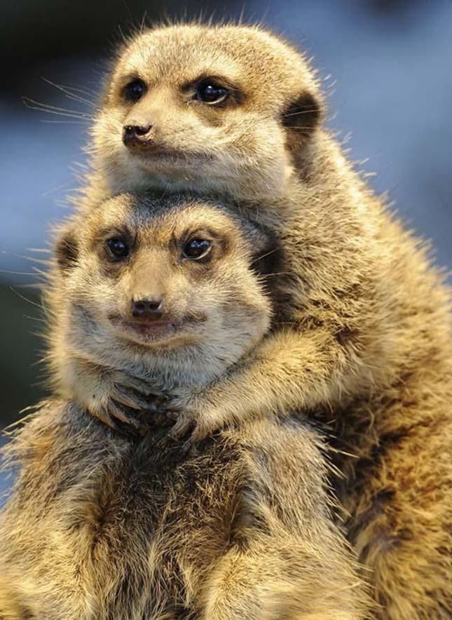 Állati párok