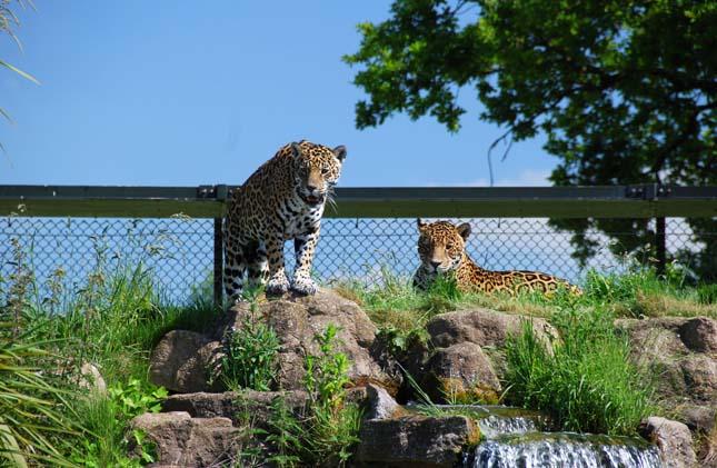 Állatkertek