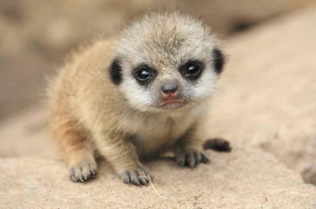 Aranyos állatkölykök és fiókák