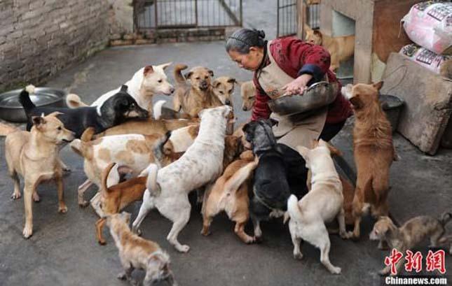 Megmentett állatok
