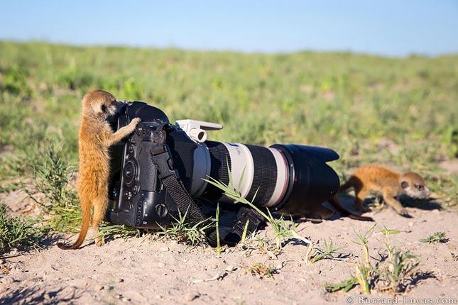 Állatok a kamera mögött