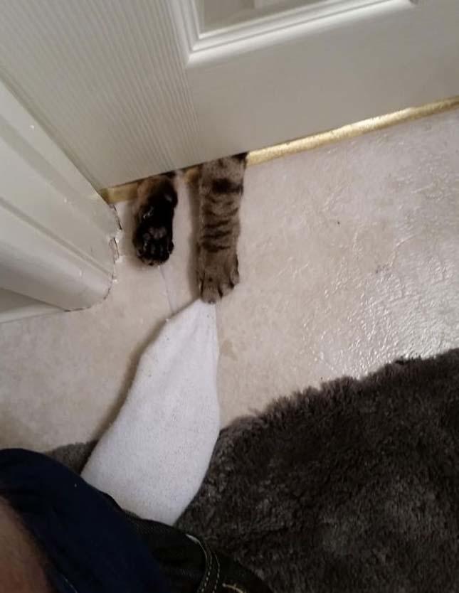 Állatok, akik mindenáron be akarnak jutni a házba
