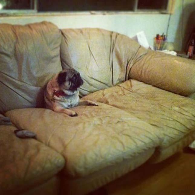 Állatok a bútorok fogságában