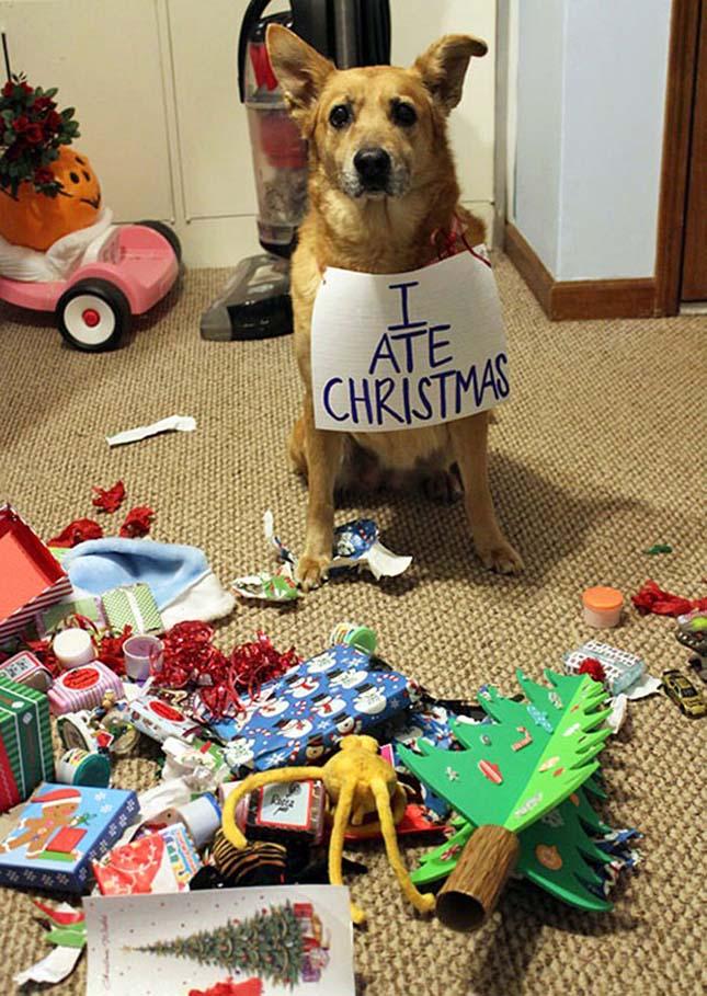 Állatok a karácsony ellen