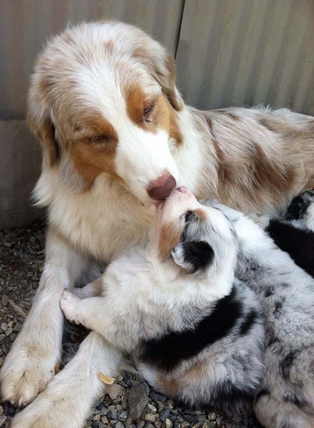 Állatok és utódaik