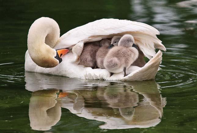 Állat családok