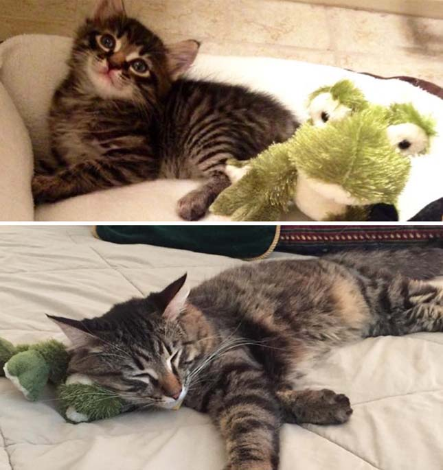 Állatok és kedvenc játékaik