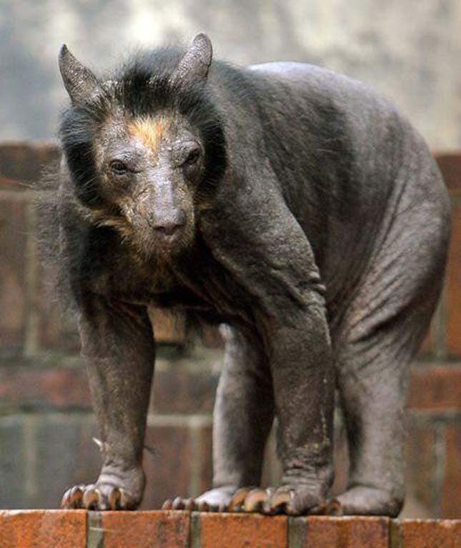 Állatok szőr nélkül