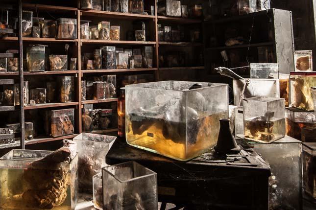Elhagyatott állatorvosi laboratórium