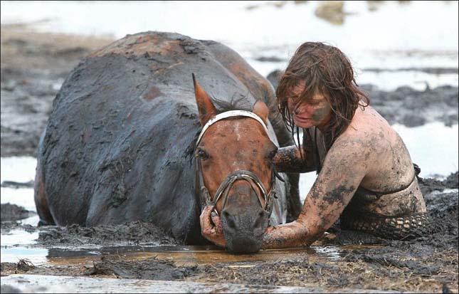 Elsüllyedt a ló a mocsárban