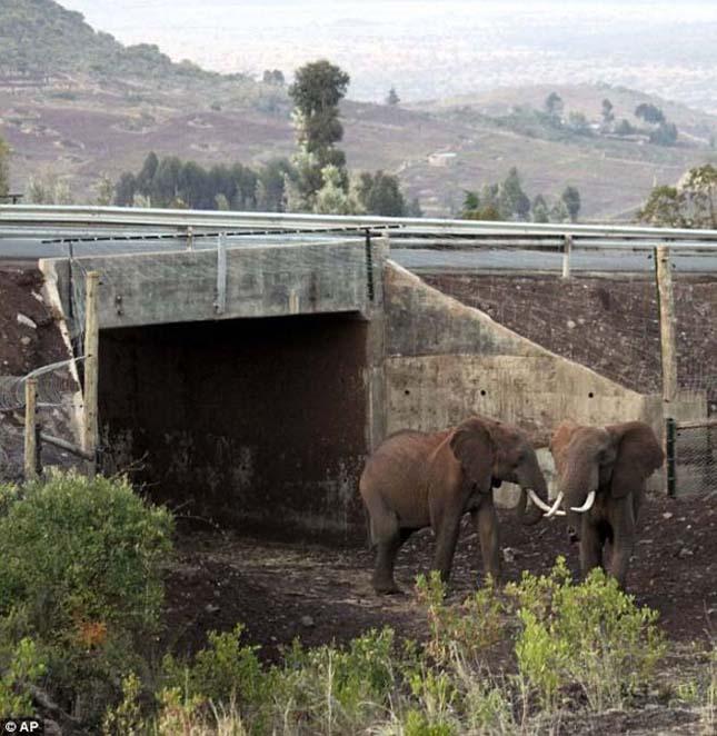 Átkelőhelyek az utakon a vadon élő állatoknak