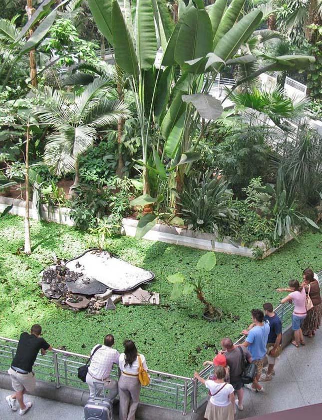 Atocha Pályaudvar, botanikus kert és vasútállomás egyben