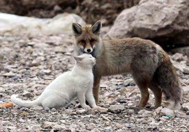 A legaranyosabb állatbarátságok