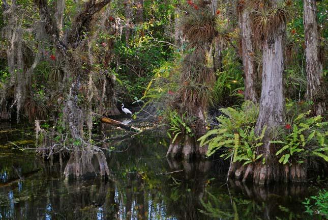 Big Cypress Nemzeti Rezervátum