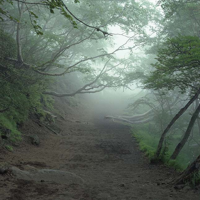 Bizarr turistalátványosságok, Halál erdő
