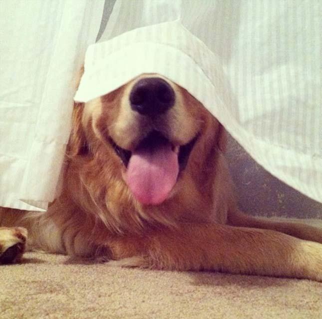 Rejtőzködő kutyák