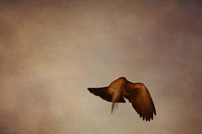 Cally Whitham festménynek tűnő fényképei