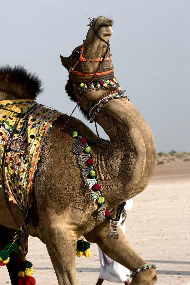 Camel Art - Művészet teveszőrből