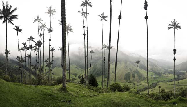 Cocora völgy