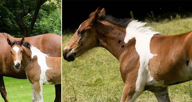 Különleges mintát viselő ló