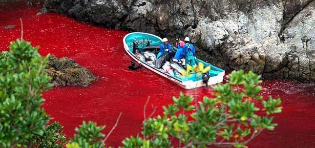 Delfinmészárlás