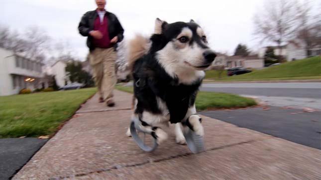 Derby kutya