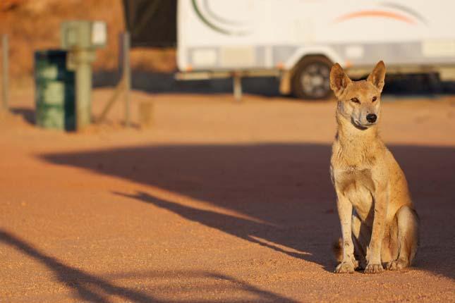 Dingó kerítés
