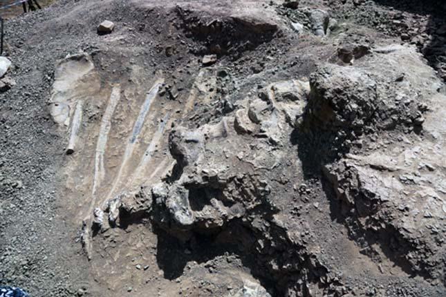 Dinoszaurusz maradvány