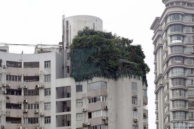Dzsungel a toronyház tetején