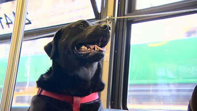 Busszal utazik a parkba a kutya