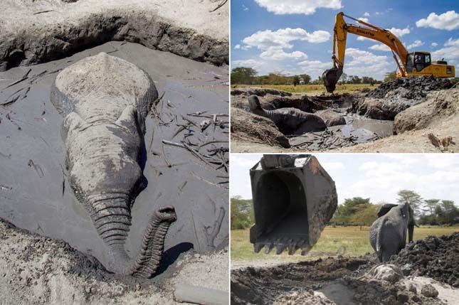 Elefánt a sárban