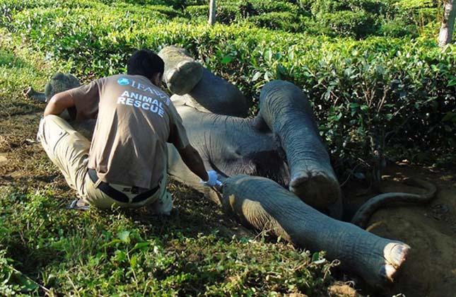 Elefánt mentés