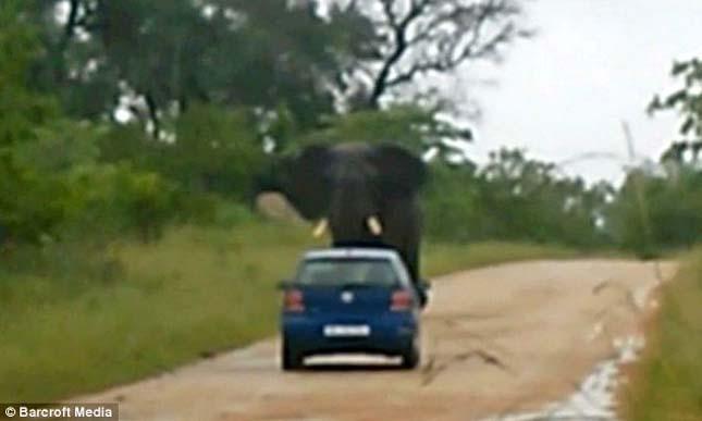 Elefánt támadás