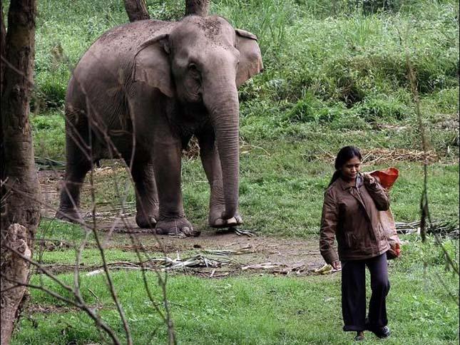 Elefánt ürülékből kinyert kávé, Black Ivory