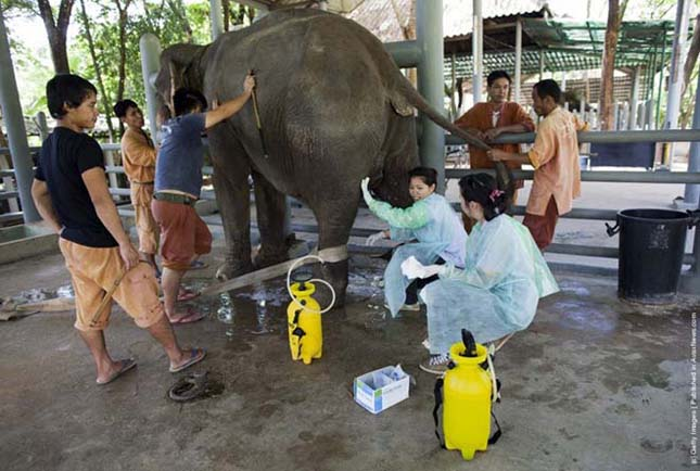 A Világ első elefántkórháza Thaiföldön