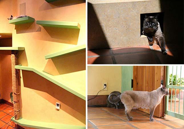 Ház macskáknak