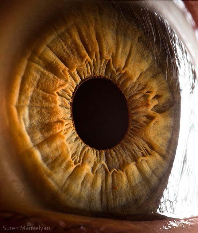 Az emberi szem közelről