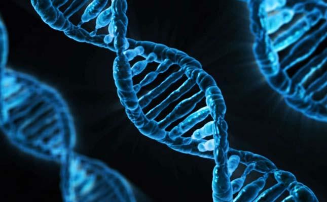 Emberi embriók génjeit módosították